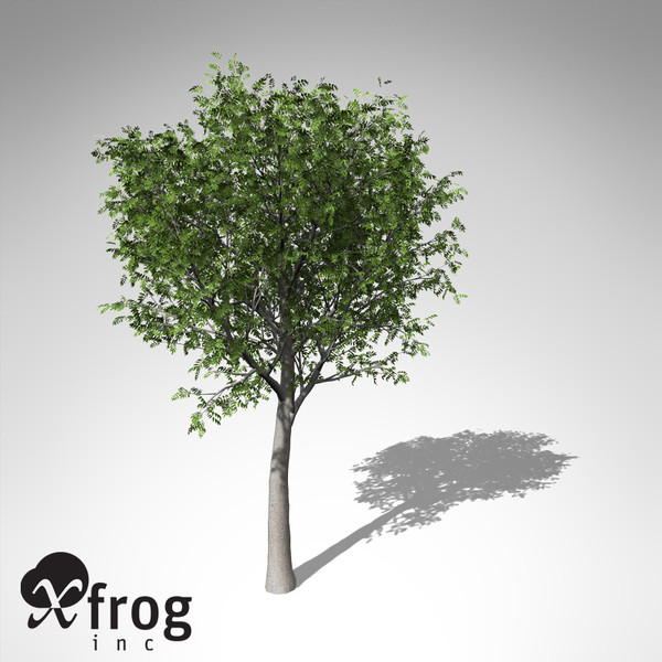 3d model xfrogplants european mountain ash - XfrogPlants European Mountain Ash... by xfrog
