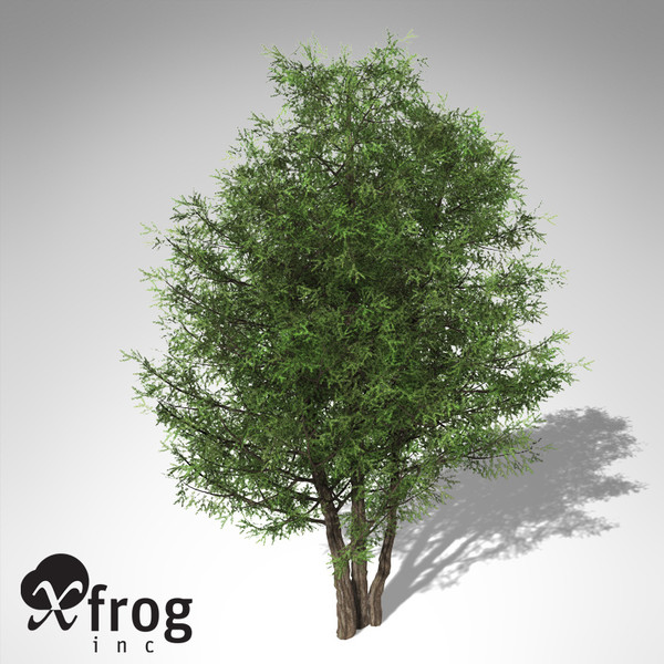 xfrogplants english yew tree 3d 3ds - XfrogPlants English Yew... by xfrog