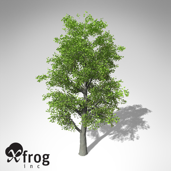 xfrogplants littleleaf linden tree 3d 3ds - XfrogPlants Littleleaf Linden... by xfrog