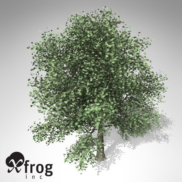 maya xfrogplants london planetree x - XfrogPlants London Planetree... by xfrog