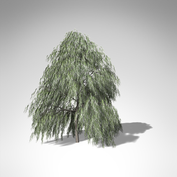 max xfrogplants weeping willow tree - XfrogPlants Weeping Willow... by xfrog