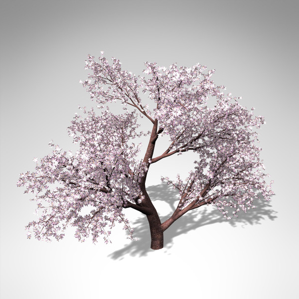 3d model xfrogplants blossoming japanese crab - XfrogPlants Blossoming Japanese Crab Apple... by xfrog