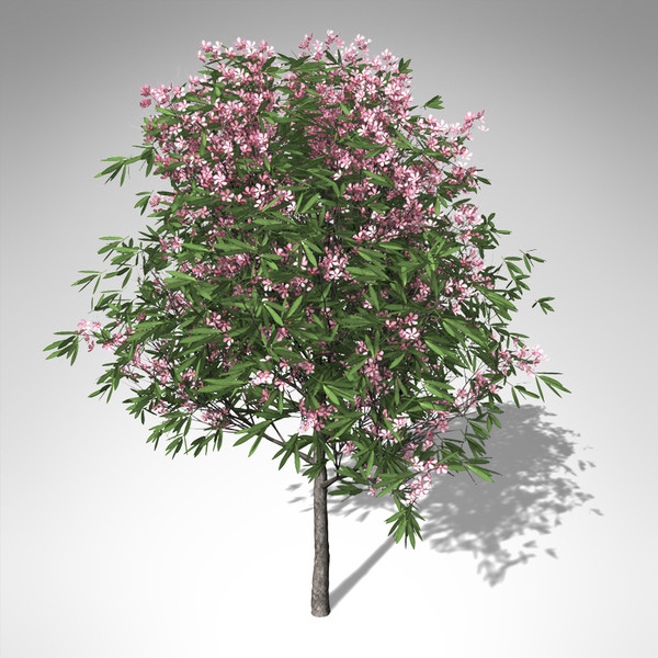 3ds xfrogplants blossoming oleander tree - XfrogPlants Blossoming Oleander... by xfrog