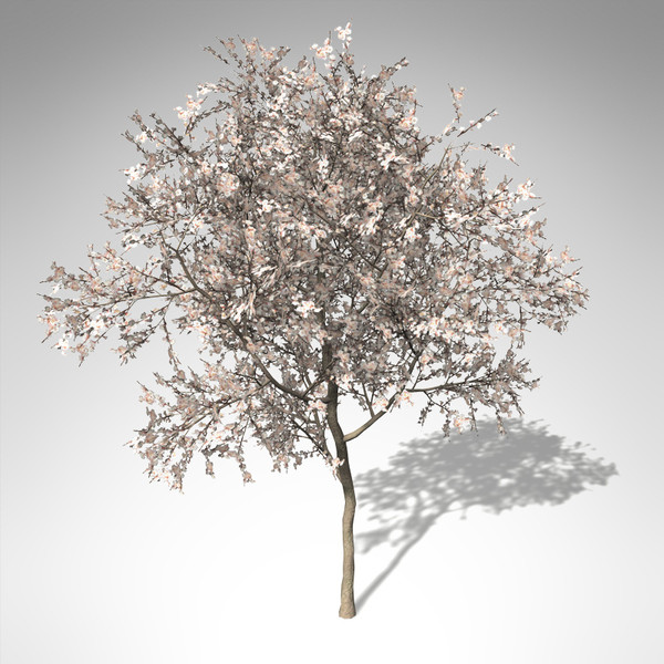 3d model xfrogplants blossoming apricot tree - XfrogPlants Blossoming Apricot Tree... by xfrog