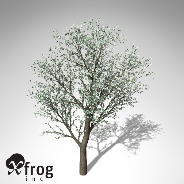 3d xfrogplants blossoming sweet cherry tree - XfrogPlants Blossoming Sweet Cherry... by xfrog