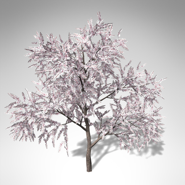 3d xfrogplants blossoming almond tree model - XfrogPlants Blossoming Almond Tree... by xfrog