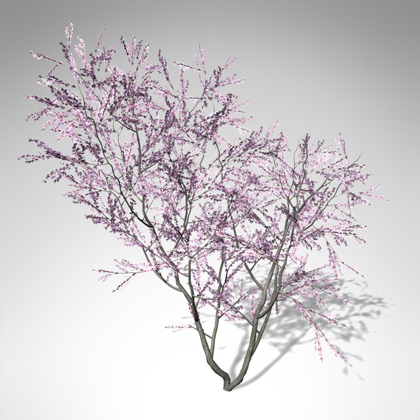 3d xfrogplants blossoming peach tree model - XfrogPlants Blossoming Peach Tree... by xfrog