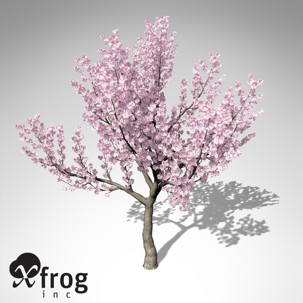 kanzan cherry tree blossoms 3d model - XfrogPlants Blossoming Kanzan Cherry... by xfrog