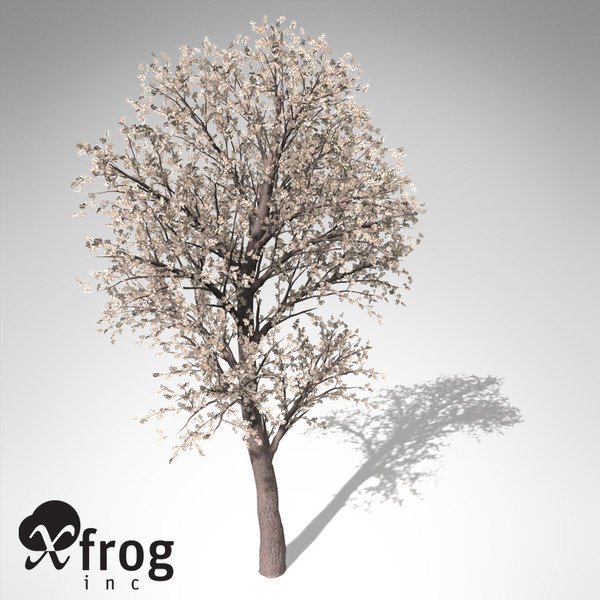 3d xfrogplants blossoming pear tree - XfrogPlants Blossoming Pear Tree... by xfrog