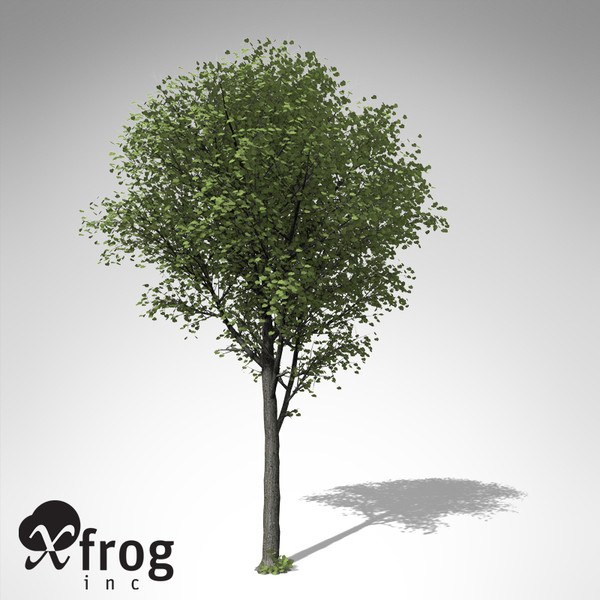 xfrogplants broad-leaved linden tree 3d model - XfrogPlants Broad-leaved Linden... by xfrog
