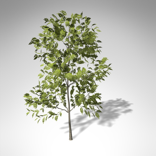 xfrogplants common ash tree 3d model - XfrogPlants Common Ash... by xfrog