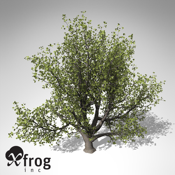 3ds xfrogplants english oak tree - XfrogPlants English Oak... by xfrog