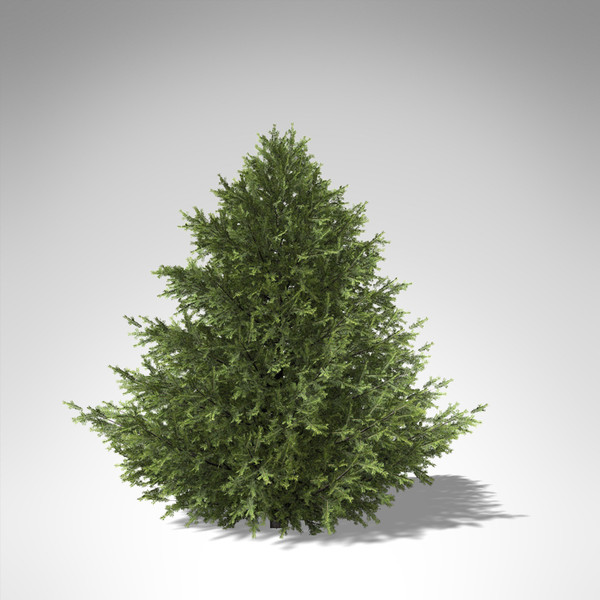 xfrogplants caucasian fir tree 3d max - XfrogPlants Caucasian Fir... by xfrog