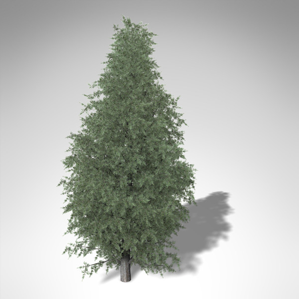 3d xfrogplants common juniper tree model - XfrogPlants Common Juniper... by xfrog