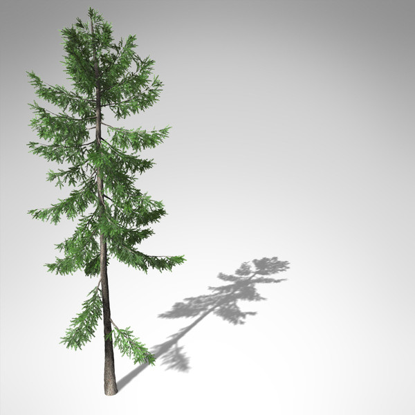3d xfrogplants norway spruce tree - XfrogPlants Norway Spruce EU... by xfrog