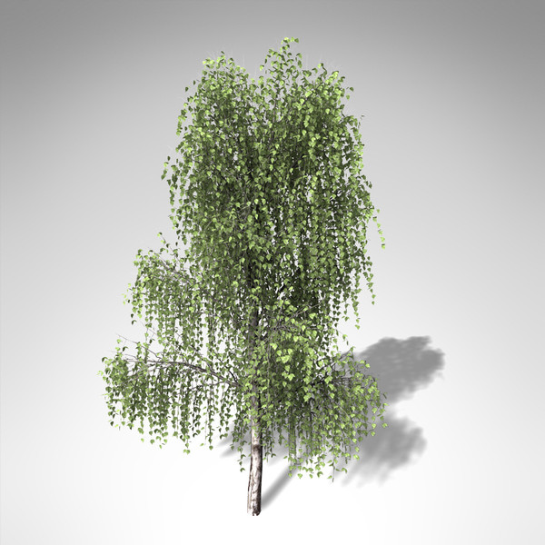 silver birch tree 3d model - XfrogPlants Silver Birch... by xfrog