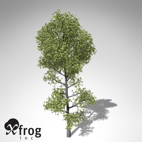 xfrogplants pyrenean oak tree obj - XfrogPlants Pyrenean Oak... by xfrog