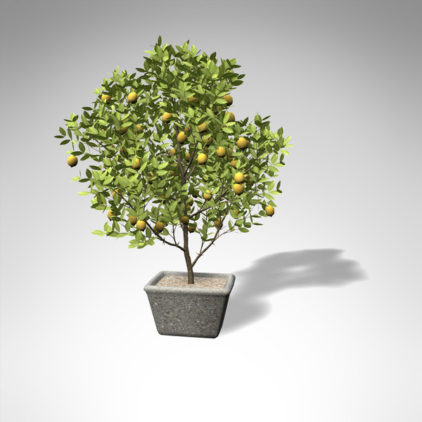 lemon tree 3d model - XfrogPlants Lemon Tree... by xfrog