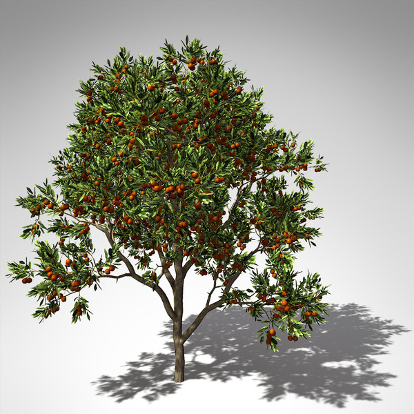 sweet orange tree 3d model - XfrogPlants Sweet Orange Tree... by xfrog
