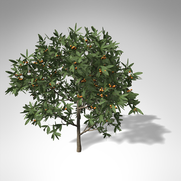 japanese medlar tree japan 3d model - XfrogPlants Japanese Medlar... by xfrog