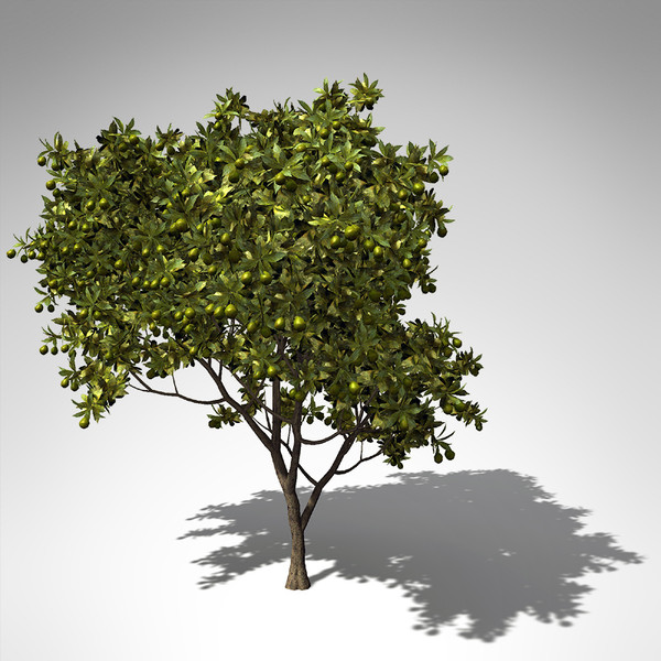 xfrogplants mango tree 3ds - XfrogPlants Mango Tree FR... by xfrog
