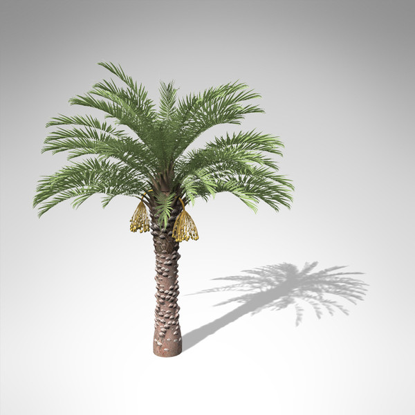 3ds max xfrogplants date palm - XfrogPlants Date Palm... by xfrog