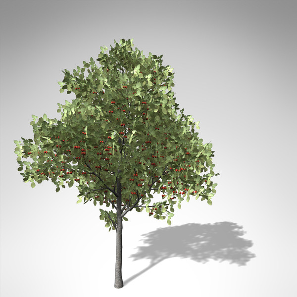 xfrogplants sweet cherry tree 3d 3ds - XfrogPlants Sweet Cherry Tree... by xfrog