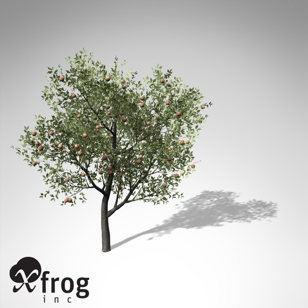 xfrogplants peach tree 3d 3ds - XfrogPlants Peach Tree... by xfrog