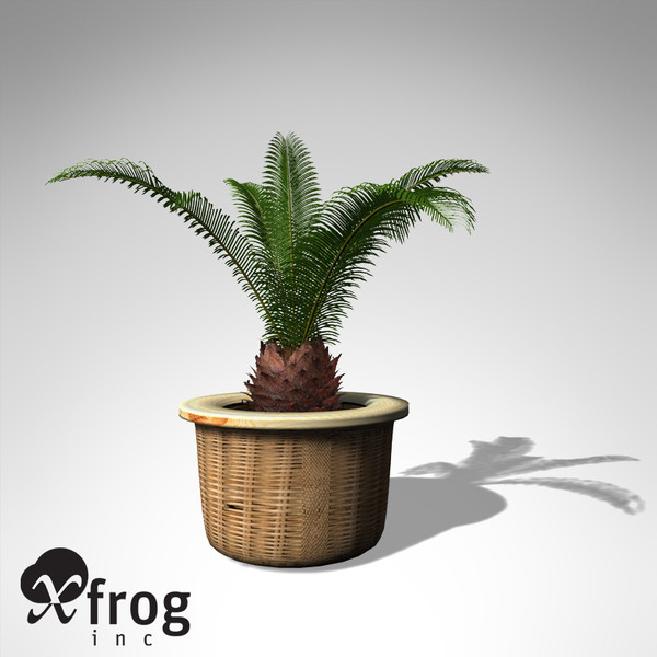 xfrogplants sago palm plant max - XfrogPlants Sago Palm... by xfrog
