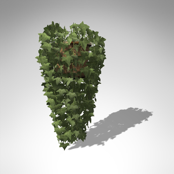 common ivy plant 3d model - XfrogPlants Common Ivy... by xfrog