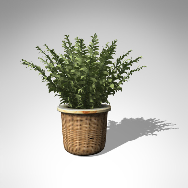 fishbone fern plant 3d model - XfrogPlants Fishbone Fern... by xfrog