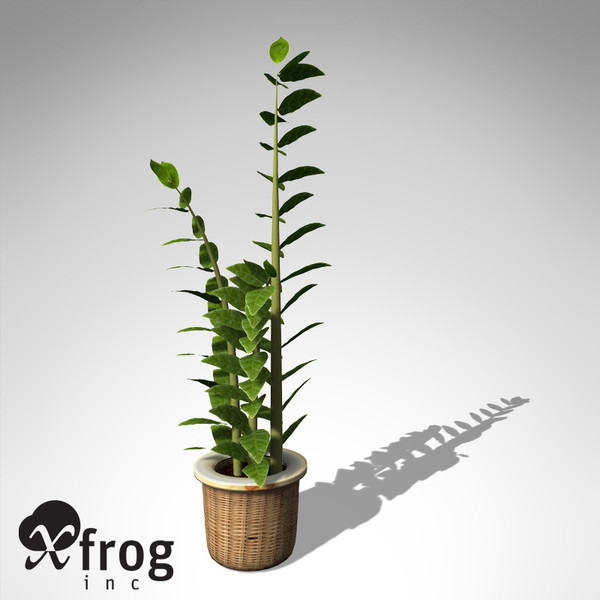 XfrogPlants Aroid Palm