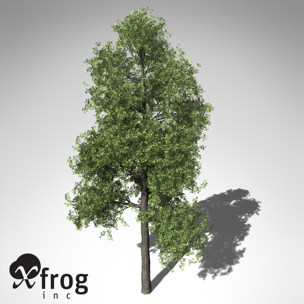 xfrogplants ginkgo tree 3d model - XfrogPlants Ginkgo... by xfrog