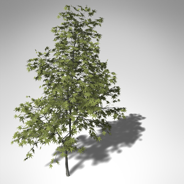 3d xfrogplants japanese maple tree - XfrogPlants Japanese Maple... by xfrog