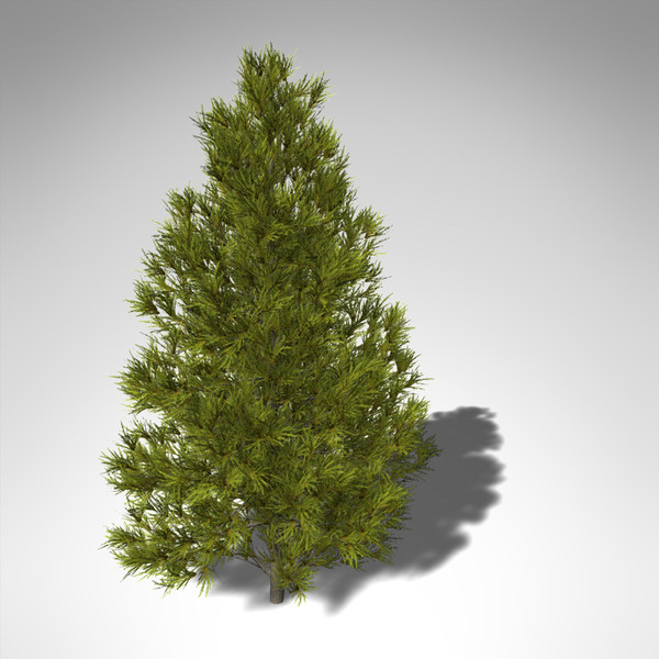 3d xfrogplants japanese cedar tree - XfrogPlants Japanese Cedar... by xfrog