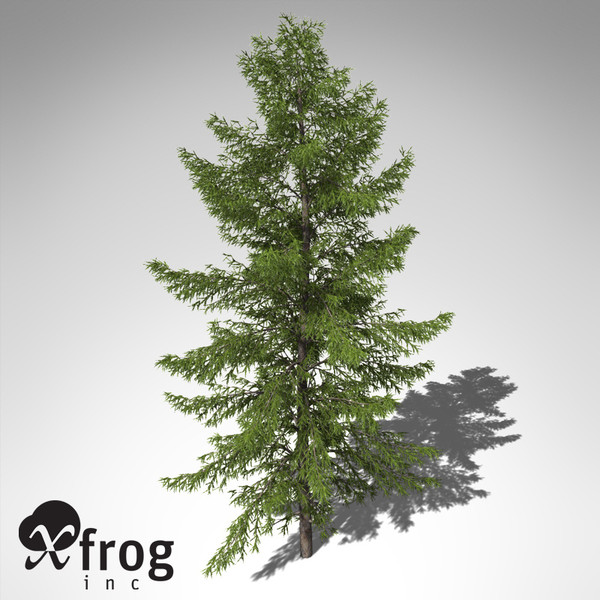 3ds max xfrogplants japanese white larch - XfrogPlants Japanese White Larch... by xfrog