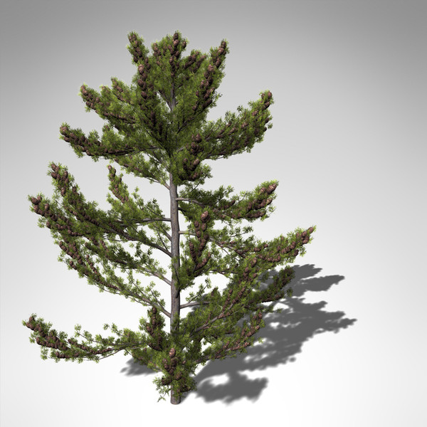 3dsmax xfrogplants japanese white pine - XfrogPlants Japanese White Pine... by xfrog