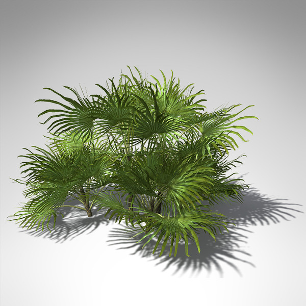 3d model xfrogplants mediterranean fan palm - XfrogPlants Mediterranean Fan Palm... by xfrog