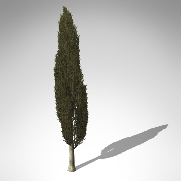 italian cypress tree 3d model - XfrogPlants Italian Cypress... by xfrog