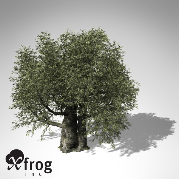 olive tree 3d model - XfrogPlants Olive Tree... by xfrog
