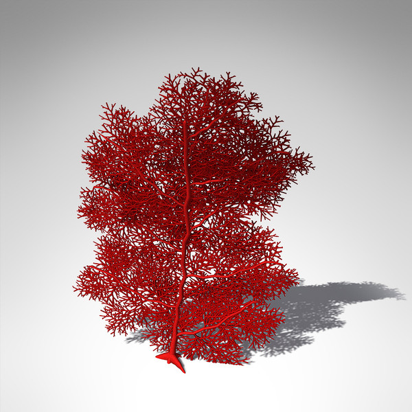 giant sea fan coral 3d model - XfrogPlants Giant Sea Fan... by xfrog