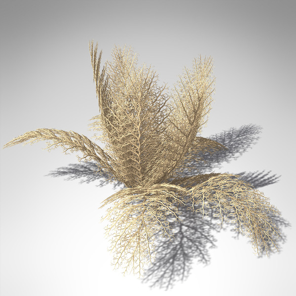 3d model xfrogplants naked basket star - XfrogPlants Naked Basket Star... by xfrog