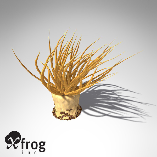 xfrogplants tube anemone animal 3d 3ds - XfrogPlants Tube Anemone... by xfrog