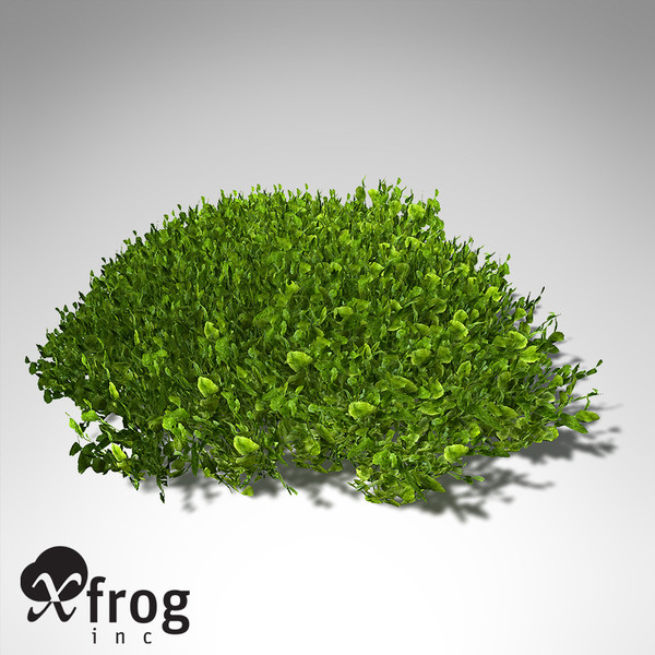 3ds max xfrogplants halimeda alga plant - XfrogPlants Halimeda... by xfrog