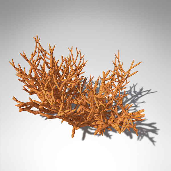 3d model xfrogplants birds nest coral - XfrogPlants Birds Nest Coral... by xfrog