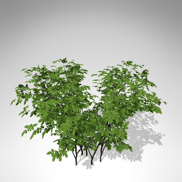 xfrogplants dog rose plant 3d model - XfrogPlants Dog Rose... by xfrog