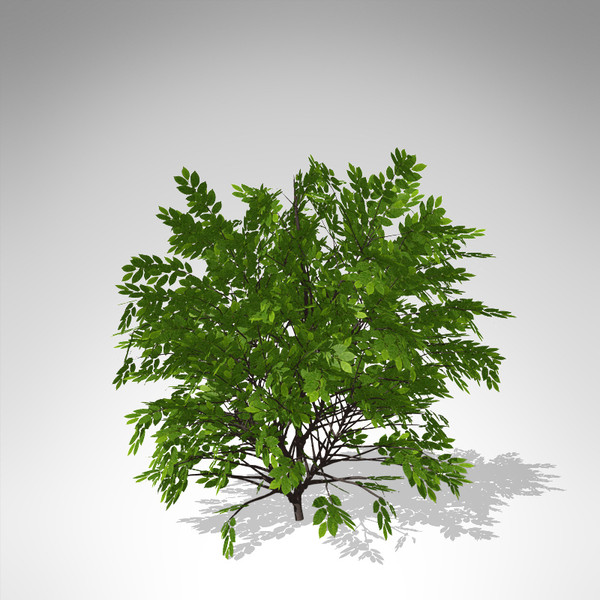 xfrogplants hornbeam tree plant 3d model - XfrogPlants Hornbeam... by xfrog