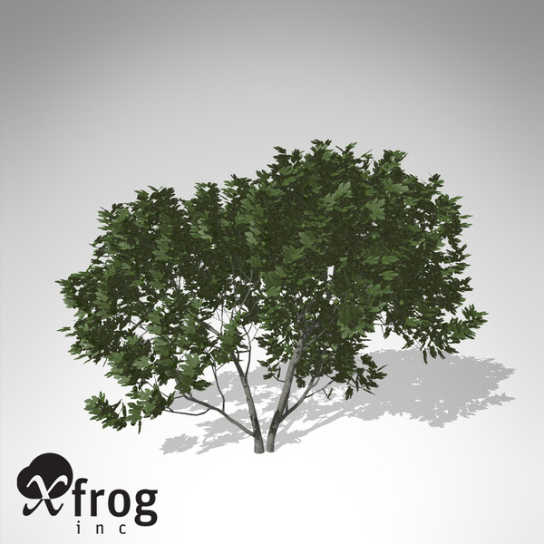 3d model xfrogplants fig tree - XfrogPlants Fig Tree... by xfrog