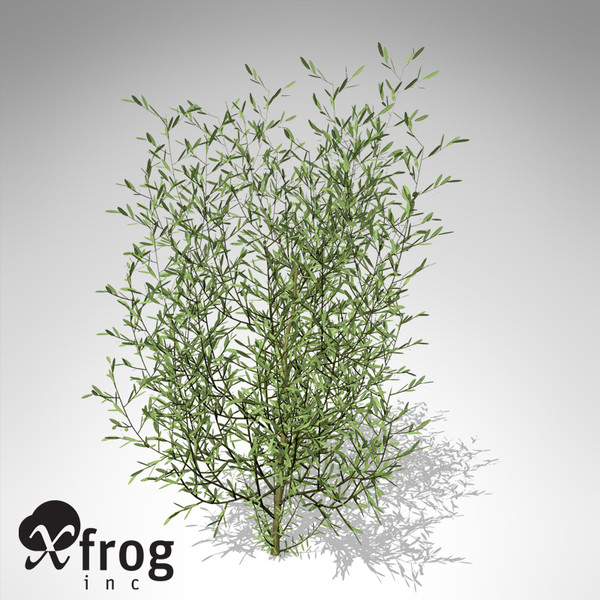3d model xfrogplants purple willow shrub - XfrogPlants Purple Willow... by xfrog