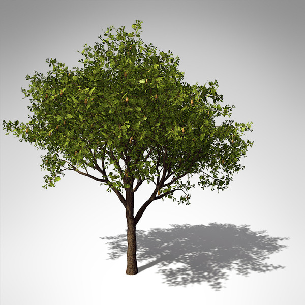 cashew tree plant 3d model - XfrogPlants Cashew... by xfrog
